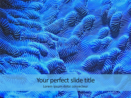 Nature & Environment: Coral Reef Macro Texture Presentation #15959