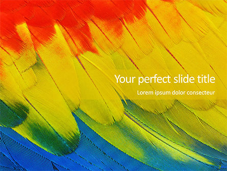 Abstract/Textures: Colorful Background of Parrot Bird Feathers Presentation #15970