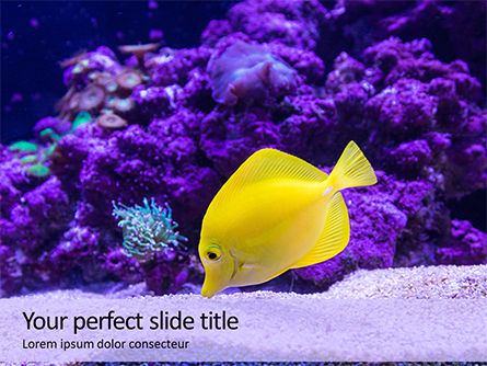 Nature & Environment: Gele Zweempjevissen In Aquarium Gratis Powerpoint Template #15972