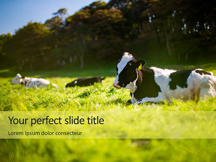 Agriculture: A Glorious Cow on a Green Field Presentation #15981