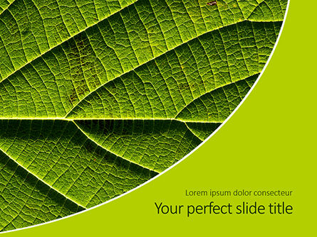 Nature & Environment: Fresh Green Leaf Texture Presentaiton #15999