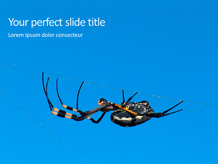 Nature & Environment: Big Garden Spider on Cobweb Presentation #16023