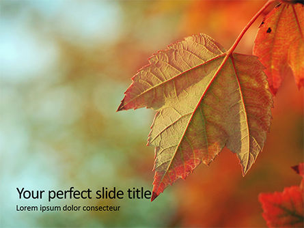 Nature & Environment: Maple Leaf In De Herfst Gratis Powerpoint Template #16064