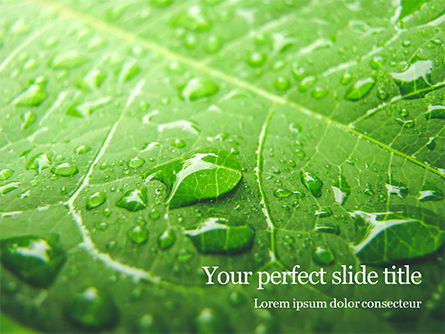 Nature & Environment: green leaf with drops of water - PowerPointテンプレート #16145