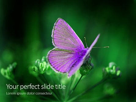 Nature & Environment: purple butterfly on green plant - PowerPointテンプレート #16164