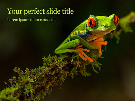 Nature & Environment: tropical red-eyed tree frog - PowerPointテンプレート #16190