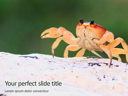 Nature & Environment: Plantilla de PowerPoint - crab on rock #16194