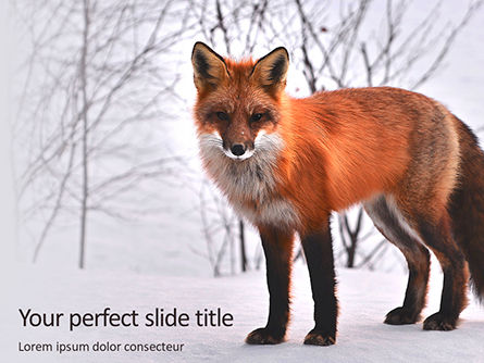 General: Red fox in winter Kostenlose PowerPoint Vorlage #16201