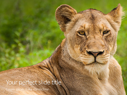 Nature & Environment: portrait of lioness on grass - 無料PowerPointテンプレート #16212