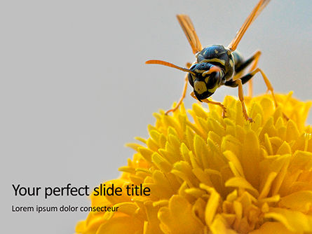 Nature & Environment: Wasp on a Yellow Flower Presentation #16279