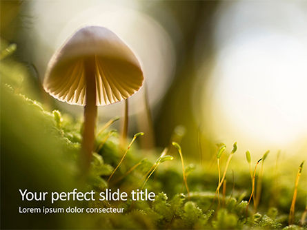 Nature & Environment: Modèle PowerPoint de cute toadstool macro #16390
