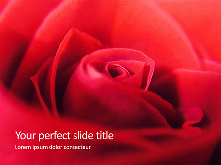 Nature & Environment: Beautiful red rose close up Kostenlose PowerPoint Vorlage #16437