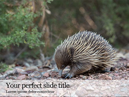 Nature & Environment: Plantilla de PowerPoint - echidna presentation #16484