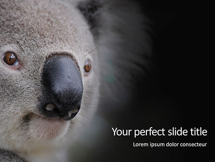 General: Plantilla de PowerPoint gratis - close-up portrait of koala bear presentation #16619
