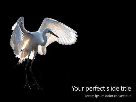 Nature & Environment: great egret presentation - 無料PowerPointテンプレート #16620